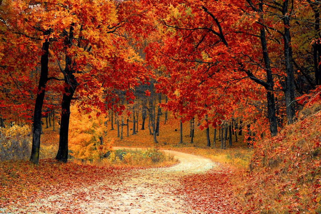otoño finca el retamar